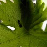 fond ecran 100430 insecte feuille noaillan