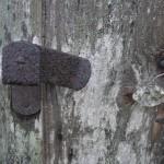 fond ecran 100626 vieux bois villandraut