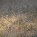 fond ecran 101005 prairie villandraut