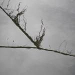 fond ecran 101115 amarre bords garonne saint-macaire