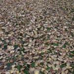 fond ecran 110103 feuilles mortes