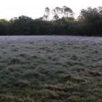 fond ecran 110203 vegetaux prairie herbe villandraut