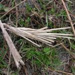 fond ecran 110408 vegetaux herbe seche garonne st-pierre-aurillac
